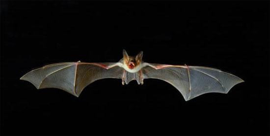 CUNEO: Bat Night 2019