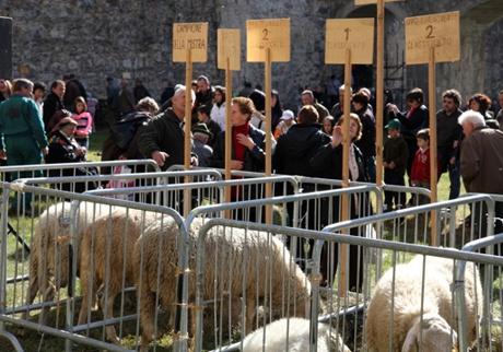 VINADIO: Fiera dei Santi - Mostra della pecora sambucana 2021