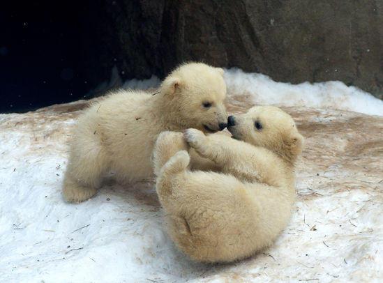 Diversi amici orsi a Cuneo