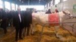 Fassona-Compral_vincitrice-vacche-grasse_Fiera-vitello-grasso-Fossano-2015