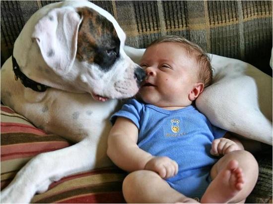Il cane non è un peluche! Pet Therapy con il cane ad Alba