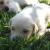 cuccioli1 (37)