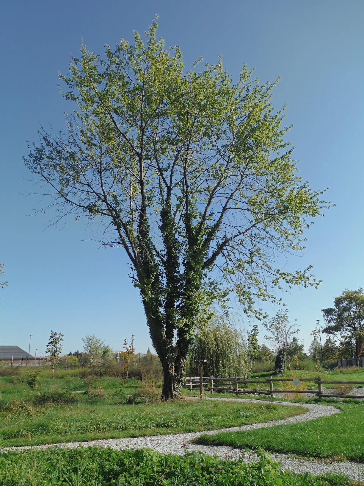 Creta Mon Amour al Parco Fluviale Gesso e Stura