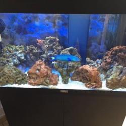 pesci e rocce vive acquario marino €1 - Moretta Il...