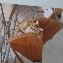 Gatto rosso maschio castrato e vaccinato FREE - Cuneo Il...