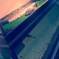 acquario €200 - cuneo Vendo splendido acquario fatto su misura,completo...