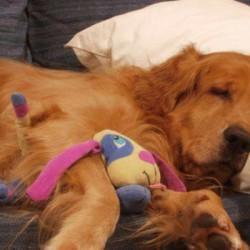 Offro pensione casalinga per cani . FREE Stai programmando le...