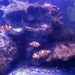 Rocce delle Fiji per marino €5 - Cuneo Vendo rocce...