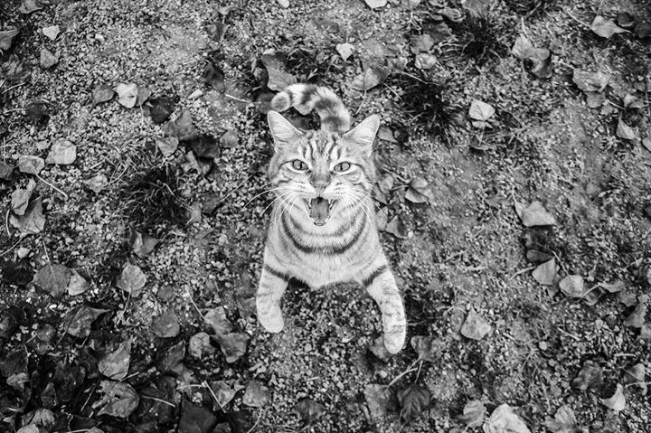 2^ Edizione Concorso Fotografico Scatto Felino