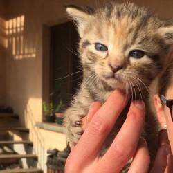 gattini FREE Regalo mici nati a ottobre ma già svezzati...