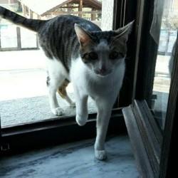 Regalo gatto maschio di un anno sterilizzato e sverminato ...e...