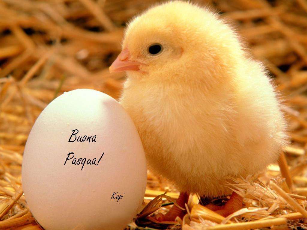 Menù di Pasqua e Pasquetta