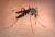 zanzare_perché_pungono_caviglie_21205255